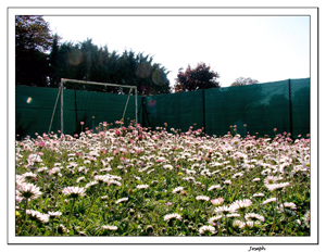 Notre jardin ce matin